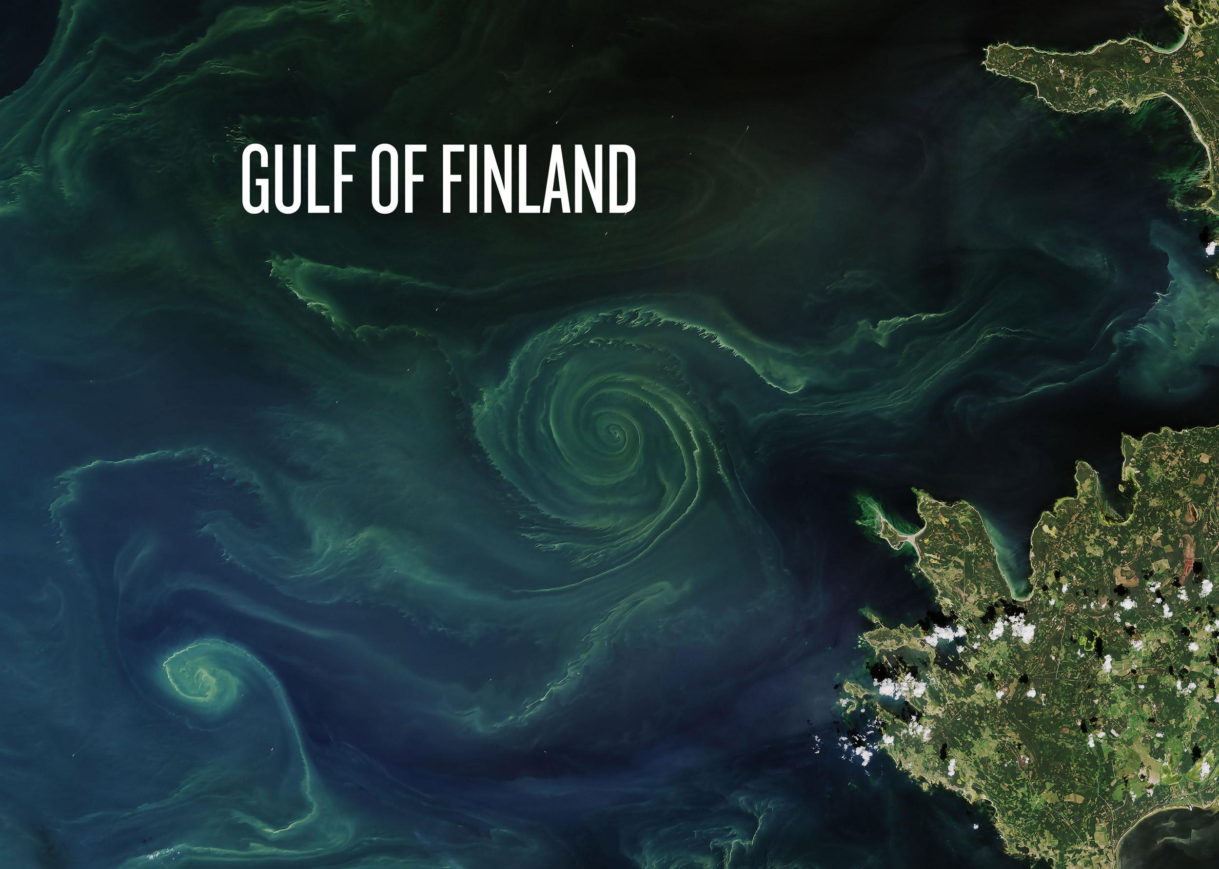 gulf_fin